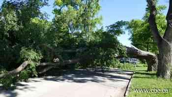 Forestry crews kept bustling over fallen, damaged trees