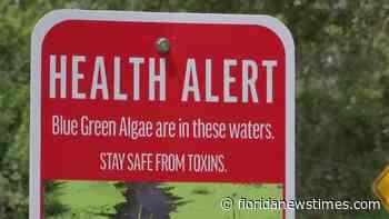 Blue-green algae toxin found at Orange River Manate Park - Floridanewstimes.com