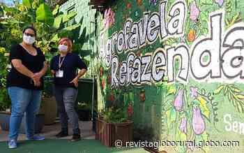 Projeto de horta urbana muda vida de mulheres em uma das maiores favelas de São Paulo - Globo Rural