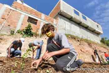 Vila Cafezal ganha horta comunitária para enfrentar fome causada pela Covid - O Tempo