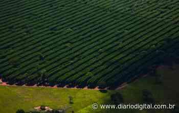 Suzano abre seleção para Analista de Silvicultura em Ribas do Rio Pardo - Diario Digital