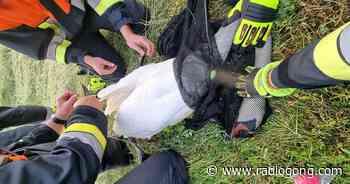 Lohr: Feuerwehr rettet Schwan aus Angelschnur - 106,9 Radio Gong