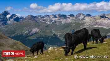 Swiss to vote in pesticide ban referendum