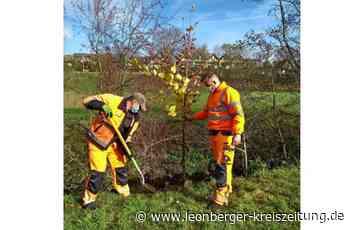 Klimaschutz in Renningen: 7500 Bäume in 18 Monaten gepflanzt - Leonberger Kreiszeitung - Leonberger Kreiszeitung