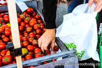 Farmers' markets in Thornbury and Flesherton get the green light - CollingwoodToday.ca