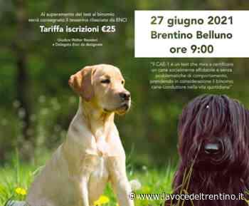 Educa il tuo cane: il 27 giugno appuntamento con ENCI Rovereto ed 'Happy Briard' per il test CAE-1 - la VOCE del TRENTINO