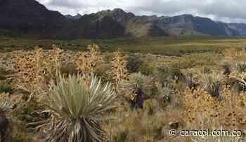 El Páramo de Guerrero, objeto de protección - Caracol Radio