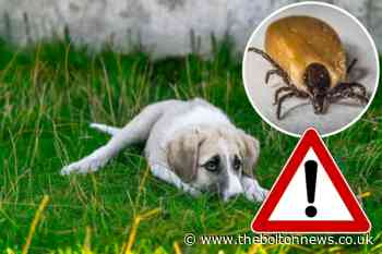 How to avoid fleas and ticks in dogs during UK heatwave