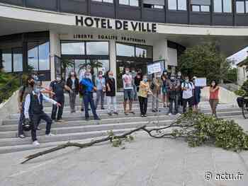 """Près de Montpellier : """"l'Arbre remarquable"""" de Castelnau-le-Lez perd une branche - actu.fr"""