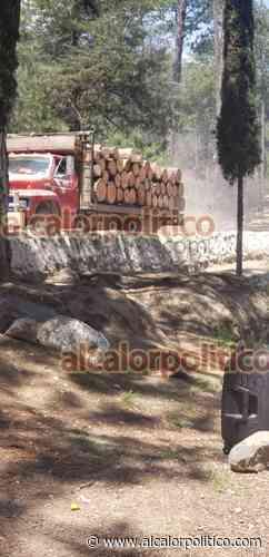 Ante tala inmoderada, invasiones e incendios, peligra el Cofre de Perote - alcalorpolitico