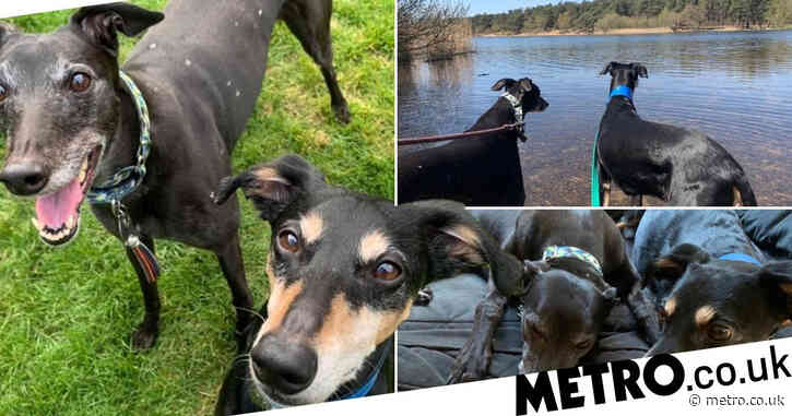 Rescue dogs who fell in love and are now inseparable need a new home together