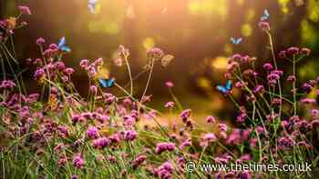 The best plants for full-sun in hot weather - The Times
