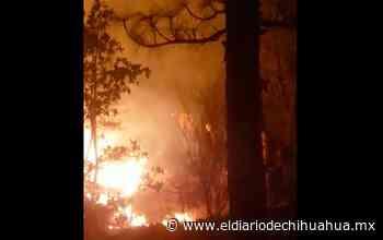 Combaten incendios de Casas Grandes con aviones de menonitas - El Diario de Chihuahua