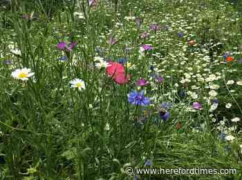 Mowing Herefordshire's roadside verges harms nature