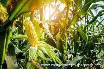GFO pledges $200,000 to Ridgetown crop research centre - Wallaceburg Courier Press