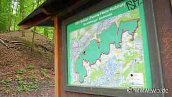 Wandern in Gevelsberg: Darum heißt der Brahmskopf so - Westfalenpost