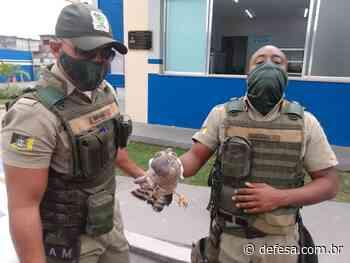 Grupamento Ambiental resgata animais em Mesquita - Defesa - Agência de Notícias