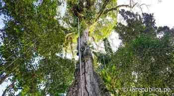 Huánuco: Codo de Pozuzo más cerca de convertirse en Área de Conservación Regional - LaRepública.pe
