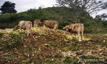 Protegen al hato ganadero en Papantla – Noreste - NORESTE