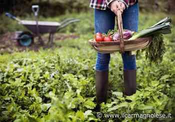Progetto Semi a Carmagnola: l'inclusione lavorativa si fa negli orti - Il carmagnolese