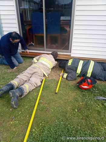Bomberos de Codegua rescatan a mascota atrapada en envigado de domicilio. - El Rancagüino