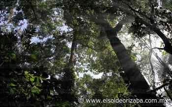 En Orizaba hay 2 áreas que protegen la vida - El Sol de Orizaba