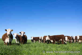 Australian trade deal could hurt Herefordshire farmers