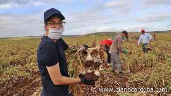 El aspecto salarial bloquea el acuerdo del convenio del campo - Diario Córdoba