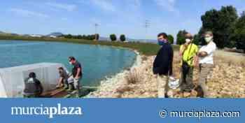 Instalan una isla-refugio para la malvasía blanca en las lagunas de Cabezo Beaza - Murcia Plaza