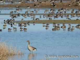 Luz sobre el origen de la salinidad de las lagunas de Villafáfila - ECOticias.com