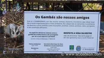 Placas informam sobre presença de gambás em praças de Araraquara - ACidade ON