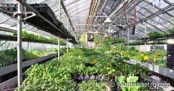 Grand potager pour démocratiser l'agriculture urbaine | Verdun | - Journal Métro