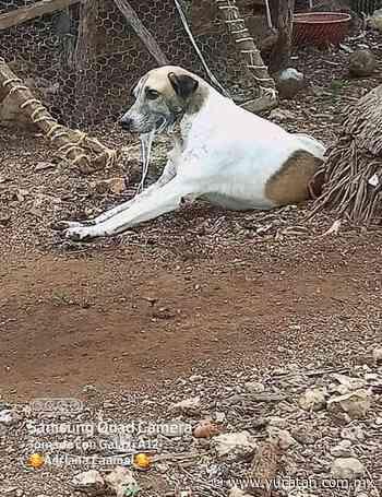 Denuncia matanza animal en Tzucacab - El Diario de Yucatán