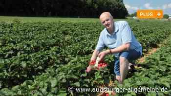 Plücken und Naschen: Die Erdbeersaison in der Region Augsburg ist gestartet