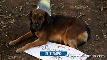Animalistas insisten en políticas más incluyentes en Santa Marta - El Tiempo