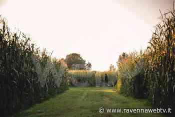 "Il Labirinto di Alfonsine dedicato al ""Purgatorio"" di Dante - Ravenna Web Tv - Ravennawebtv.it"