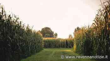"""Il Labirinto di Alfonsine dedicato al """"Purgatorio"""" di Dante. Apertura sabato 12 giugno, sarà visitabile fino a metà settembre - RavennaNotizie.it - ravennanotizie.it"""
