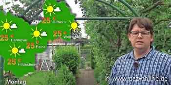 Der Sommer dreht richtig auf - Das Wettervideo für Peine vom 14. bis 18. Juni 2021 - Peiner Allgemeine Zeitung - PAZ-online.de
