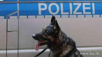 Vermisst bei Offenbach: Mann aus Rodgau verschwunden – Spürhund führt Polizei zum Erfolg - Westfälischer Anzeiger