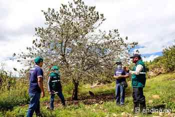 Cajamarca: invierten S/ 35 millones en proyecto de erradicación de la mosca de la fruta - Agencia Andina