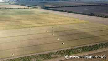 Nonantola: il 13 giugno il sorteggio dei terreni della Partecipanza per il Riparto 2021-33 - SulPanaro