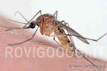 Rosolina: riparte l'azione di disinfestazione delle zanzare - RovigoOggi.it