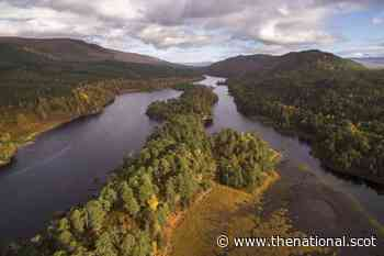 Revealed: The radical vision to make Scotland a woodland nation - The National