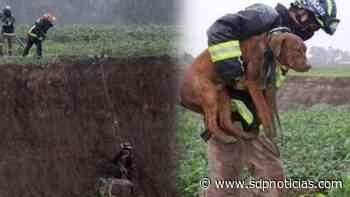 Héctor Hugo Pimentel, el bombero que rescató a los perritos del socavón de Puebla - sdpnoticias