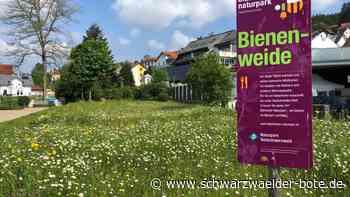 Blumen im Kurpark Schonach - Schonach blüht wild auf - Schwarzwälder Bote