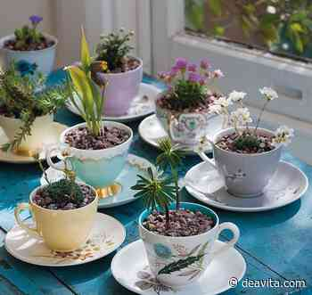 Altes Geschirr bepflanzen: Blumen, Pflanzen und Deko für den Minigarten - DEAVITA