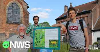 Lennik verdubbelt oppervlakte bijenvriendelijk grasbeleid - VRT NWS