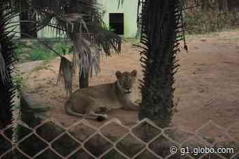 Parque Zoobotânico de Teresina reabre após quase um ano de reforma; fotos - G1