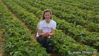 Moosburg an der Isar - Erdbeer-Saison: Auf die Plätze, fertig, Erdbeerkuchen! - idowa