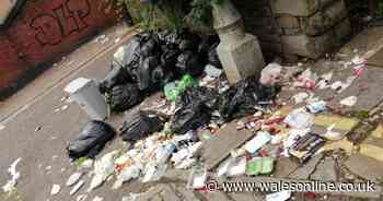 The mess of rotting food and dirty nappies that's been feasted on by rats for years outside a woman's home - Wales Online